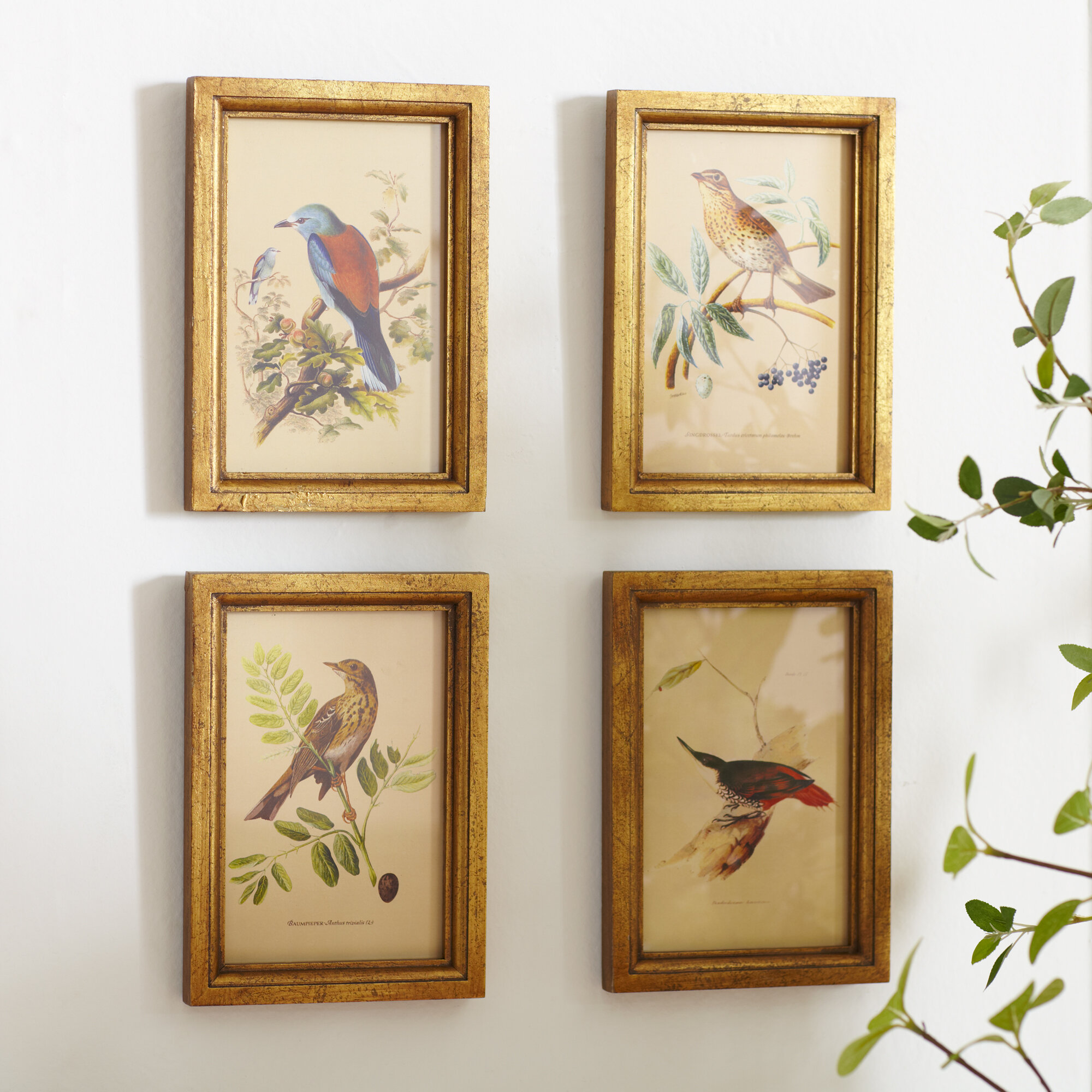 83194101b16 Birch Lane™ Heritage  Avian  4 Piece Framed Gallery Wall set   Reviews