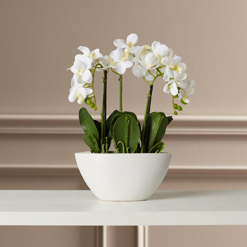 willa arlo interiors phalaenopsis silk flowers in pot & reviews
