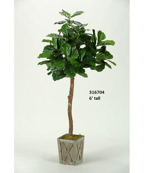 Bay Isle Home Fiddle Leaf Fig Tree In Planter U0026 Reviews | Wayfair