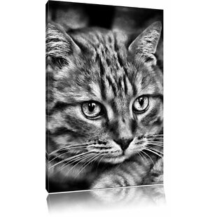 Beautiful House Cat Wall Art On Canvas