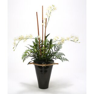 Black vase with white flowers wayfair black and white orchid garden in fuji vase mightylinksfo Image collections