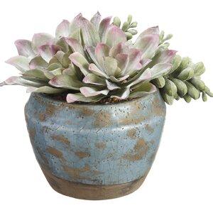 Faux Echeveria Succulent Floral Arrangements