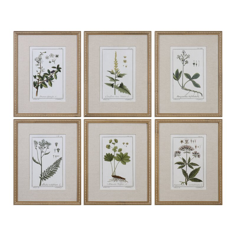 Three Posts Floral Botanical Study 6 Piece Framed