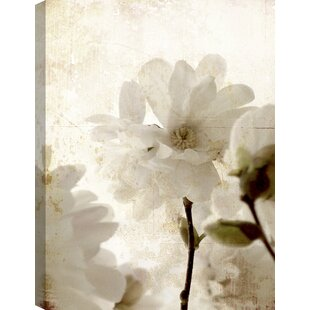 White flower painting wayfair white flowers acrylic painting print on canvas mightylinksfo