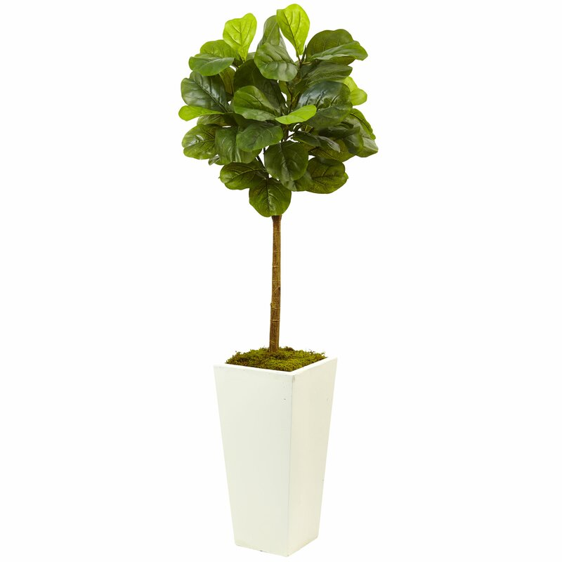 fiddle leaf fig plant in planter - Fiddle Leaf Fig Tree