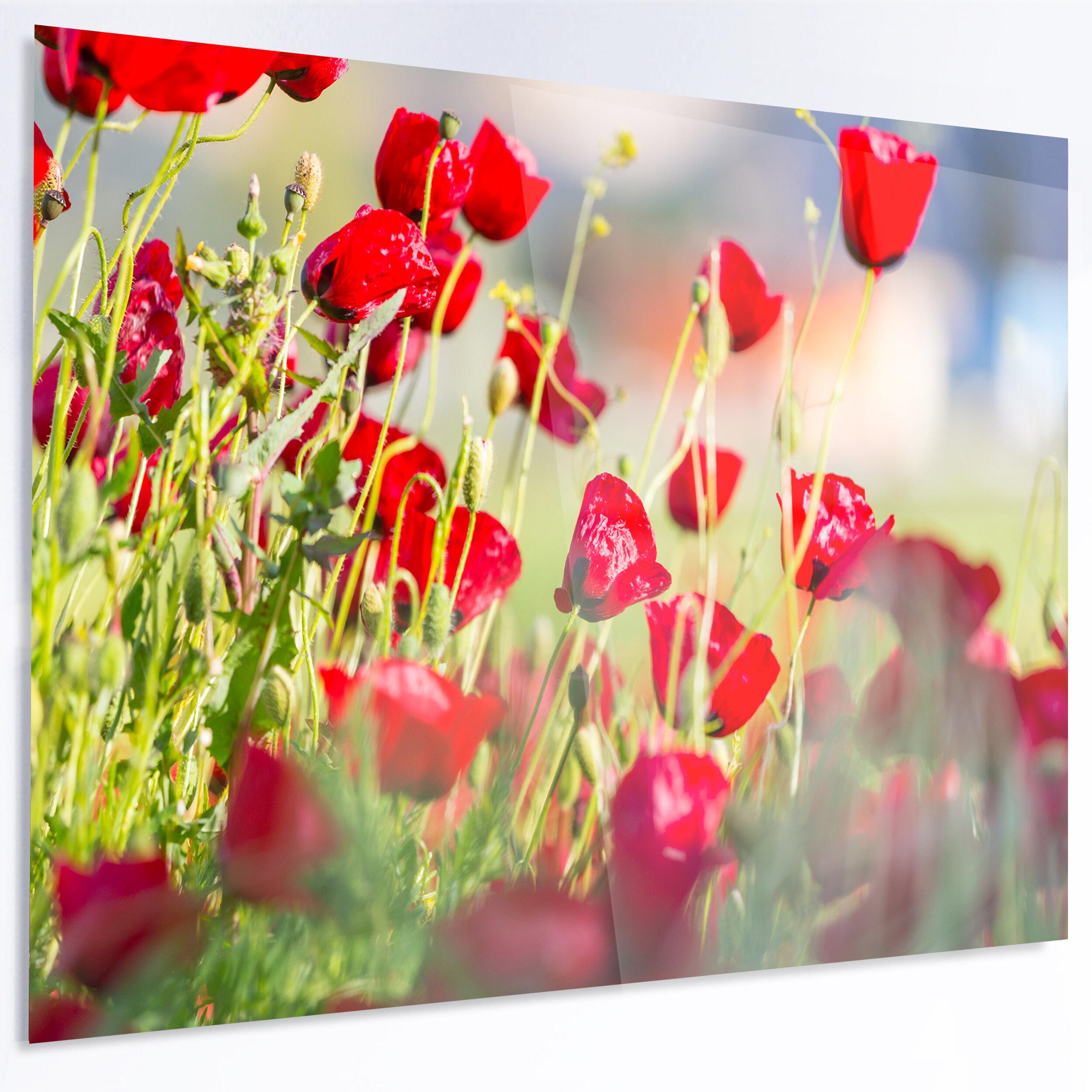 Designart Beautiful Red Poppy Flowers View Photographic Print On