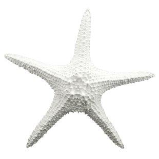 Starfish Wall Décor