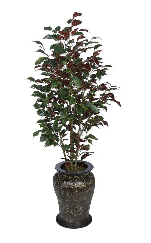 Three Posts Ficus Tree In Decorative Vase Reviews Wayfair