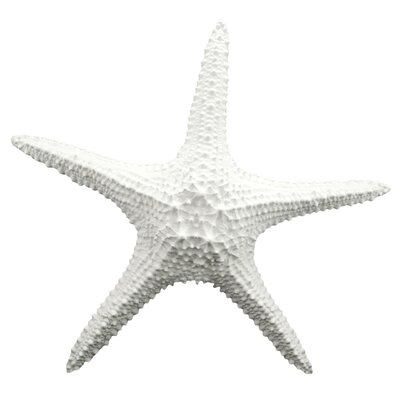 Attractive Starfish Wall Décor