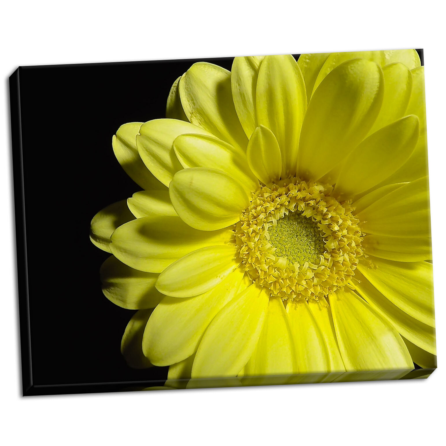 Ebern Designs \'Yellow Daisy\' Photographic Print on Wrapped Canvas ...