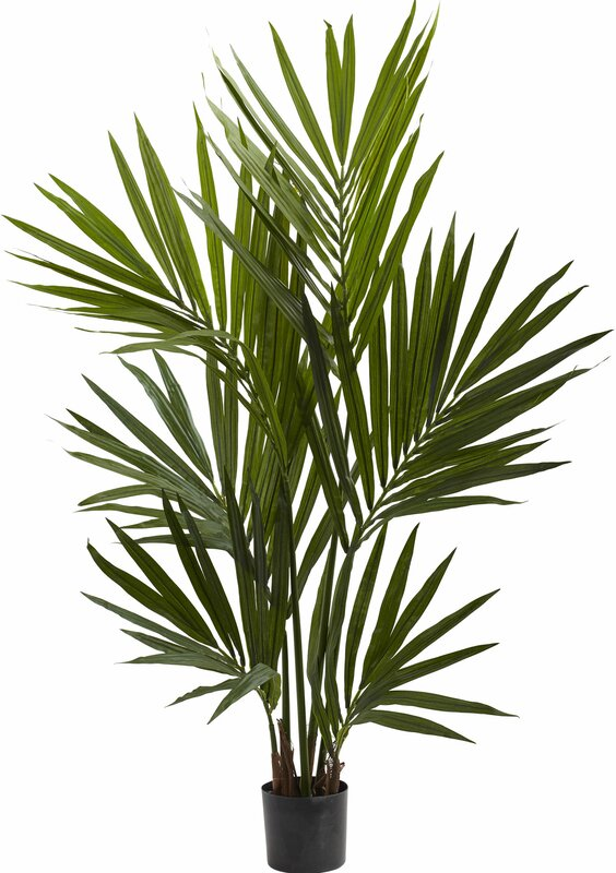 entracing palm tree type house plant. Kentia Palm Silk Tree in Pot Nearly Natural  Reviews Wayfair
