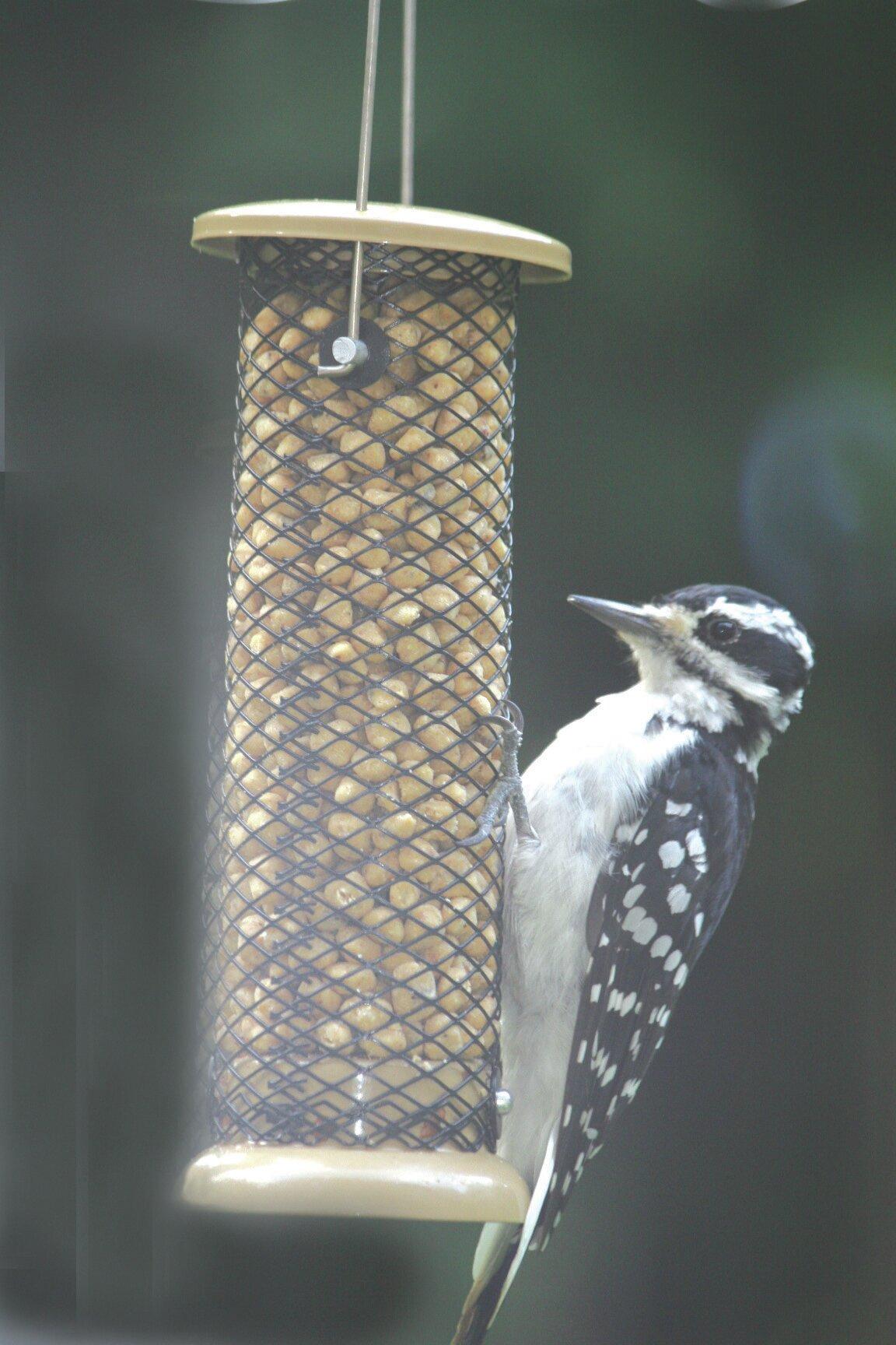 Birds Choice Low Cost Peanut Tube Bird Feeder   Wayfair