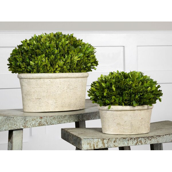 kitchen faucet pictures uttermost 2 oval domes preserved boxwood plant set 13161