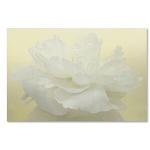 Pure White Peony by Cora Niele Photographic Print on Wrapped Canvas