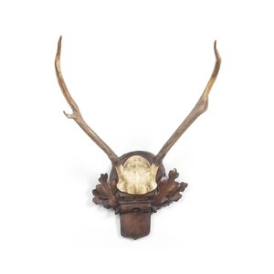 Small Deer Antlers Wall Décor