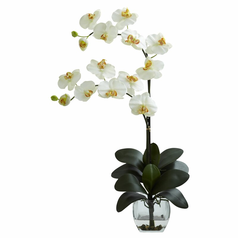 World Menagerie Double Phalaenopsis Orchid In Vase Reviews Wayfair