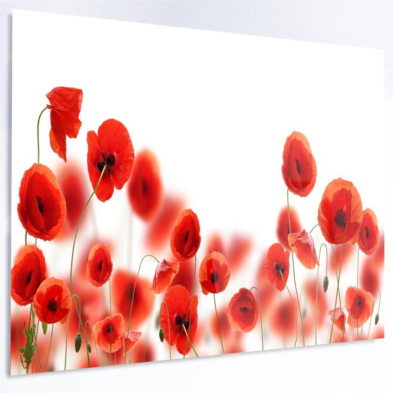 DesignArt \'Lovely Poppy Flowers on White\' Graphic Art Print on Metal ...