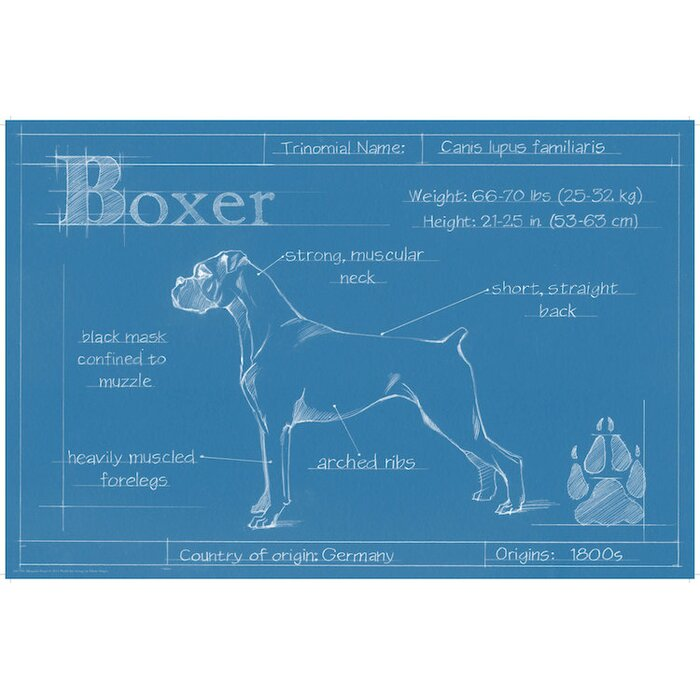 East urban home blueprint of a boxer drawing print on canvas blueprint of a boxer drawing print on canvas malvernweather Images
