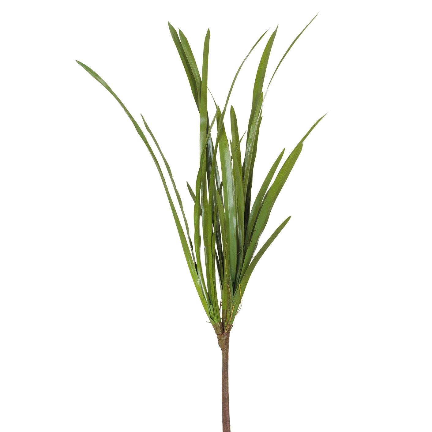 Grass Foliage Branch
