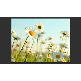 Daisies: A Spring Meadow 3.09m x 400cm Wallpaper by Artgeist