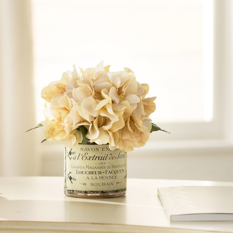 Christmas Lights Shop Adelaide: Adelaide Hydrangea In French Labeled Pot & Reviews