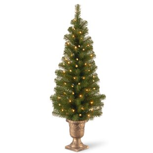 Montclair Spruce 4' Green Artificial Christmas Tree with 50 Lights