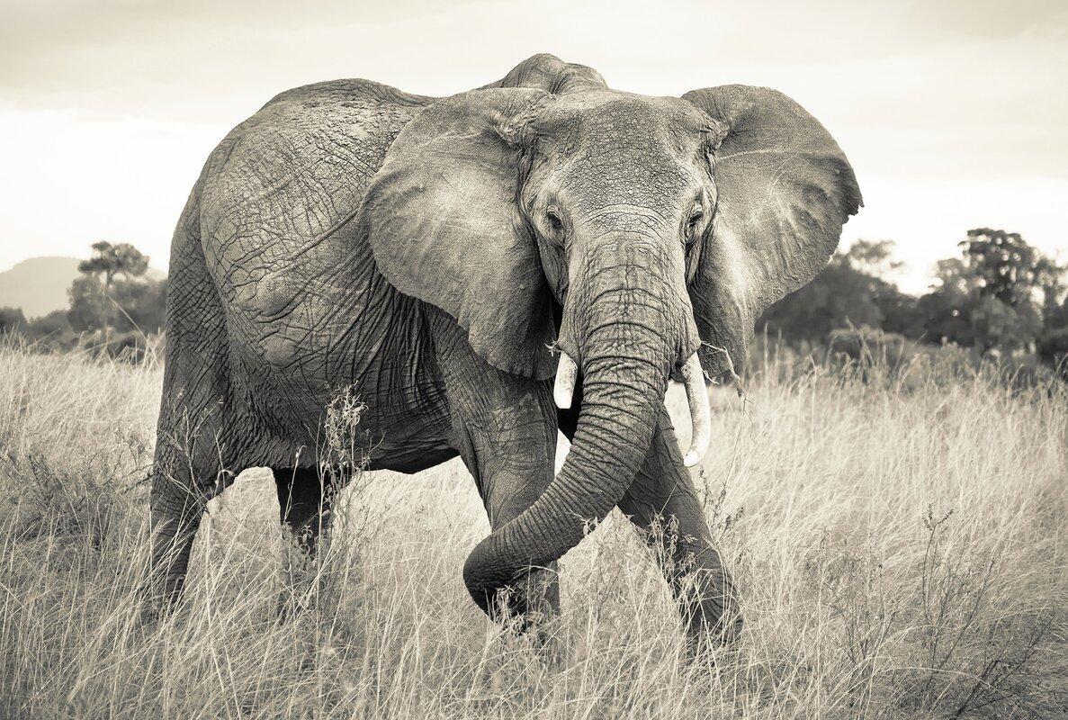 Wallpops komar elephant wall mural reviews wayfair for Elephant wall mural