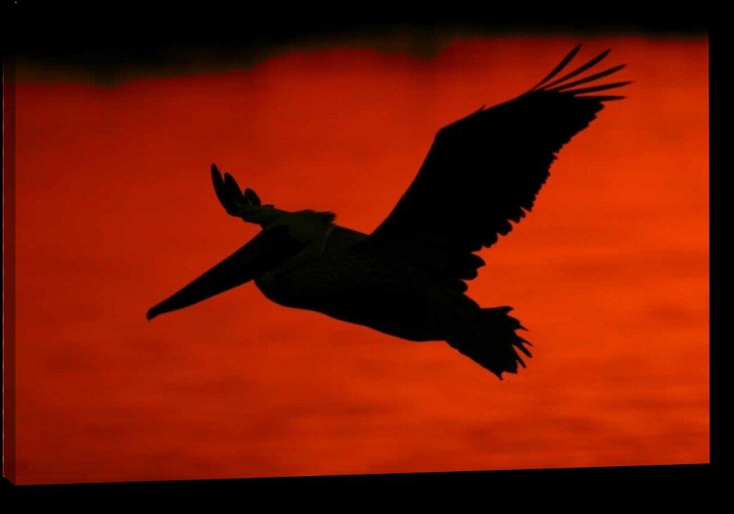 Millwood Pines U0027CA, Bolsa Chica Lagoon Brown Pelican Flyingu0027 By Arthur  Morris Giclee Art Print On Wrapped Canvas   Wayfair