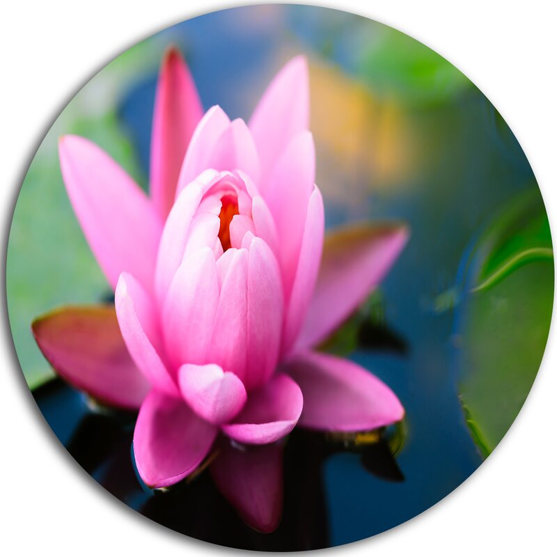 Lotus Flower In The Pond Photographic Print On Metal