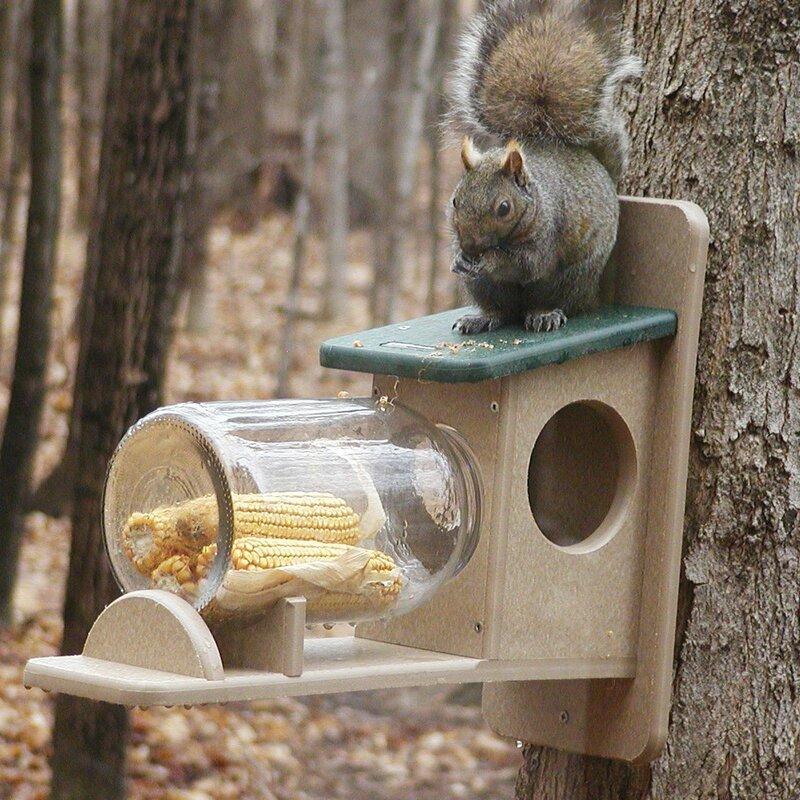 Birds Choice Recycled Jar Squirrel Feeder Amp Reviews Wayfair