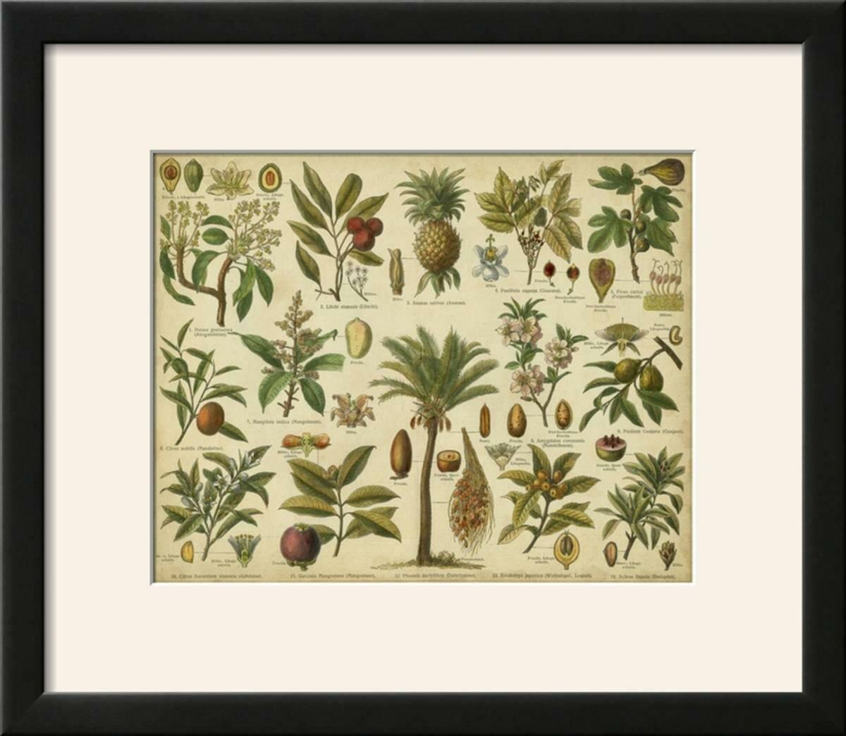 Classification of Tropical Plants\' Framed Graphic Art Print | Joss ...