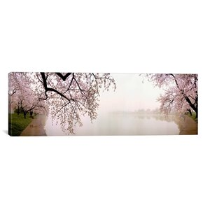 'Cherry Blossoms at the Lakeside, Washington, D.C' Photographic Print on Canvas
