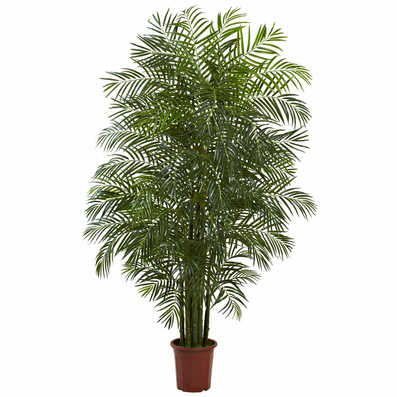 entracing palm tree type house plant. Areca Palm Tree in Pot Nearly Natural  Reviews Wayfair