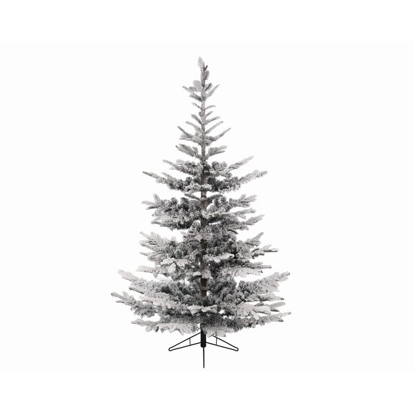Northlight 8 Snowy Everland Layered Superior Flocked Ilis Fir Artificial Christmas Tree With Unlit Reviews Wayfair