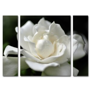 'Lovely Gardenia' 3 Piece Photographic Print on Wrapped Canvas Set