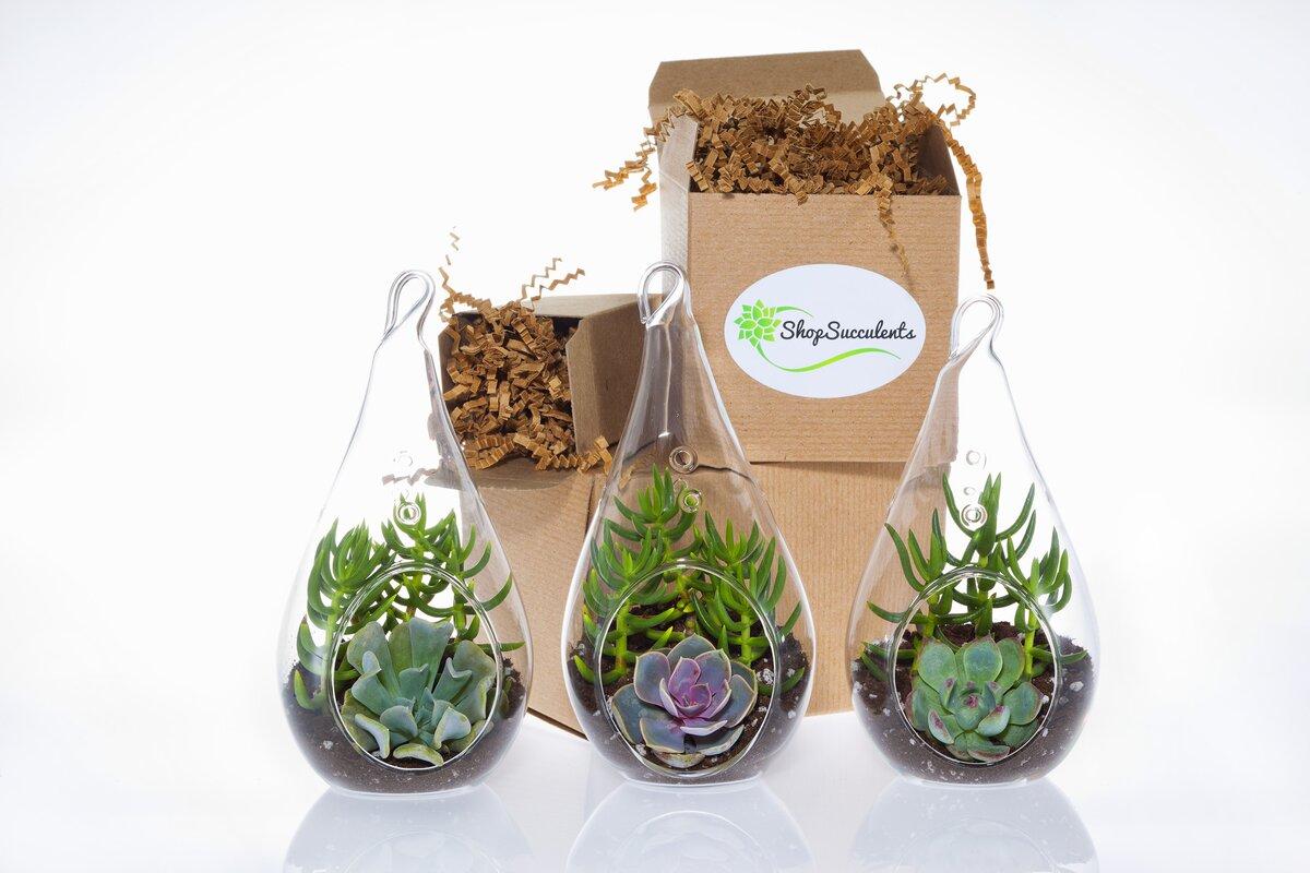 Succulent Terrarium Collection 6 Piece Decorative Glass Succulent Plant