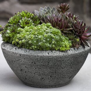 Top Large Outdoor Bowl Planter | Wayfair LW95