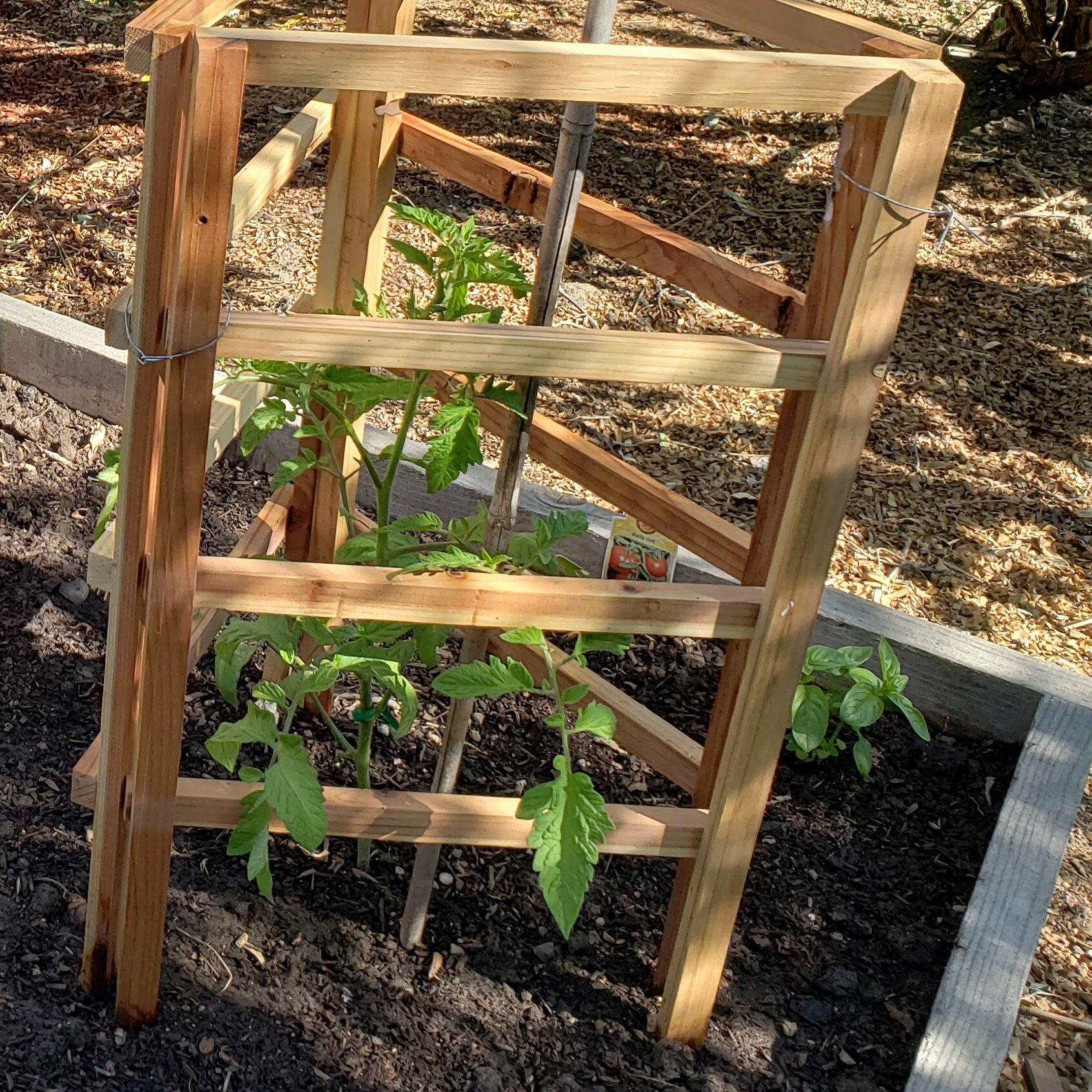 OregonWoodProducts 6-Piece Wood Lattice Panel Trellis | Wayfair