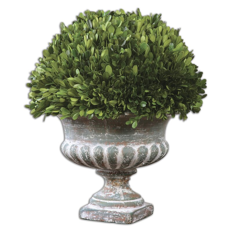 Amazing Preserved Boxwood Garden Urn Topiary In Planter