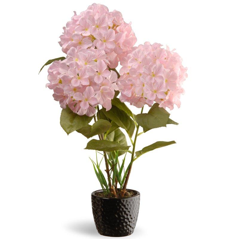 National Tree Co. Hydrangea Flowers in Pot & Reviews   Wayfair