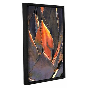 36 x 36 ArtWall 4 Piece Linda Parkers Desert Agave Gallery Wrapped Canvas Square Set