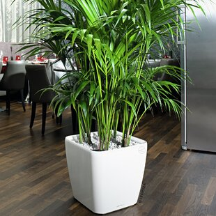 Indoor Planters You Ll Love Wayfair