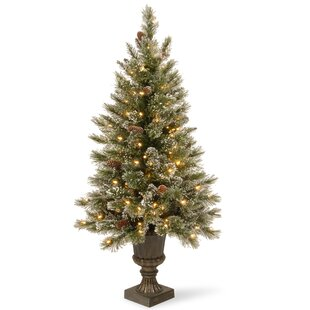 greenwhite pine trees artificial christmas tree with 150 incandescent clearwhite lights - Small Artificial Christmas Tree