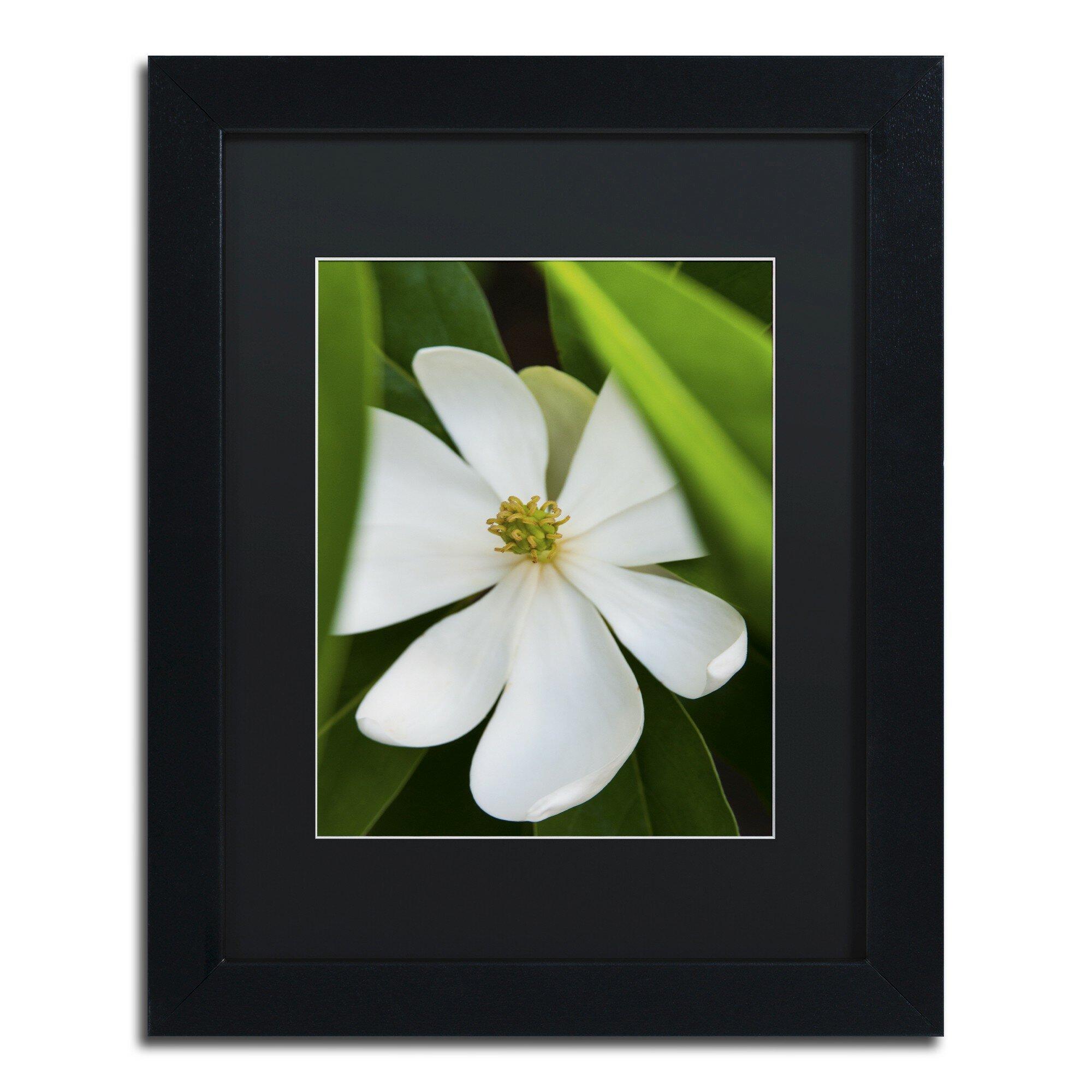 Trademark Art White Magnolia Flower By Kurt Shaffer Framed