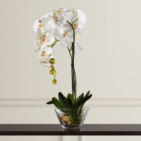 White Orchid In Glass Vase Wayfair