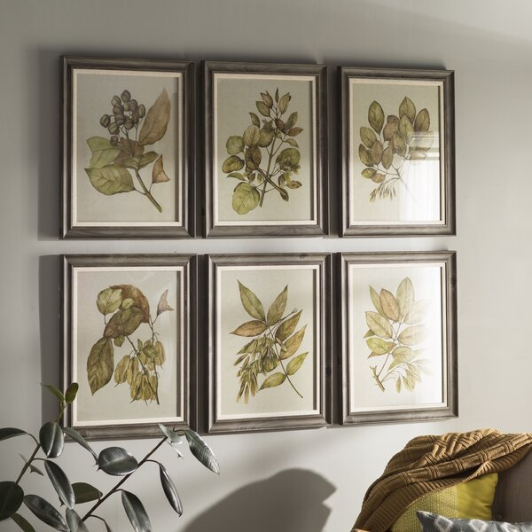 Seedlings 6 Piece Framed Graphic Art Set Amp Reviews Birch