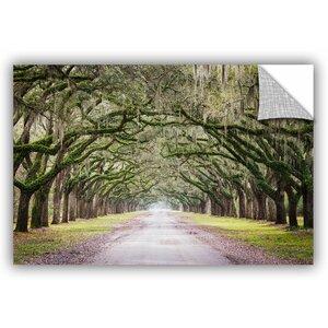 Cody York Oak Trees with Spanish Moss in Savanna Georgia Wall Decal