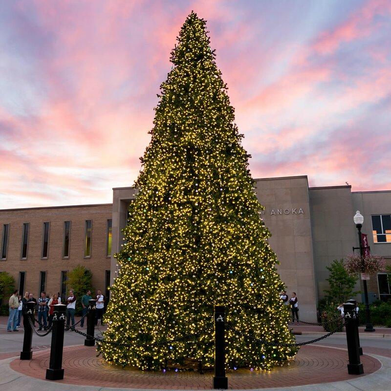 httpssecureimg2 fgwfcdncomim32588913resiz - 14 Christmas Tree