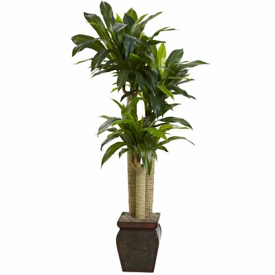 Indoor Decorative Trees | Wayfair