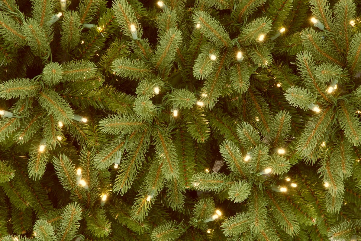 The Holiday Aisle Jersey Fraser Fir 7.5' Green Fir